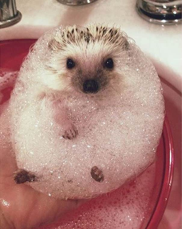 XX-animals-that-enjoys-taking-a-bath-2__605_mini