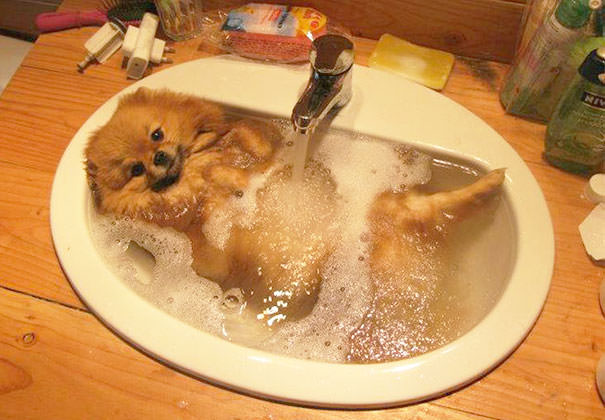 XX-animals-that-enjoys-taking-a-bath-5__605_mini