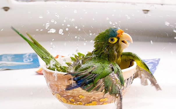 XX-animals-that-enjoys-taking-a-bath-6__605_mini