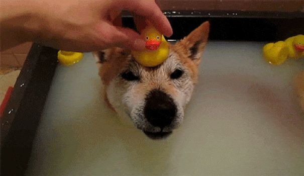 animals-love-taking-bath-gif-2__605