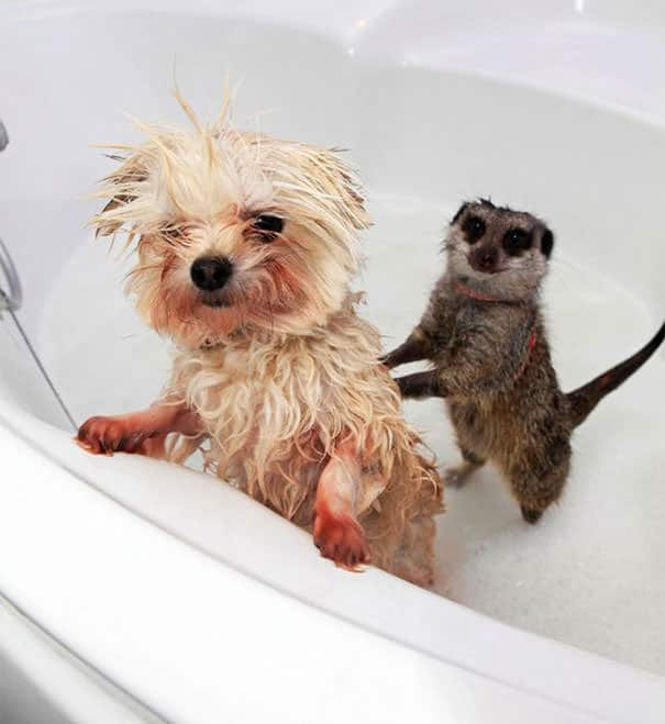 animals-taking-bath-14__605_mini