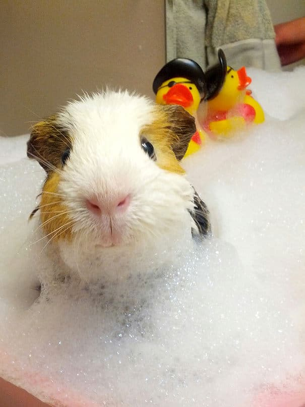 animals-taking-bath-36__605_mini