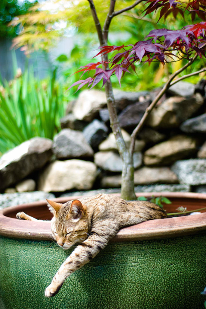 cat-in-flowerpot-38__605_mini