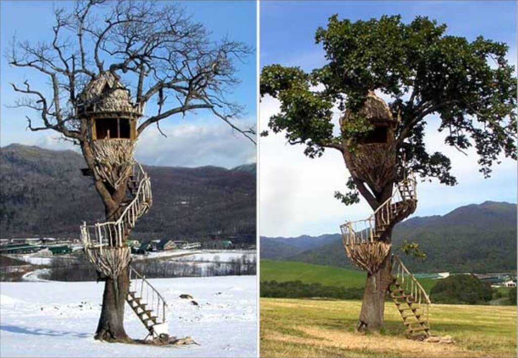 sq-tree-house-5 (1)