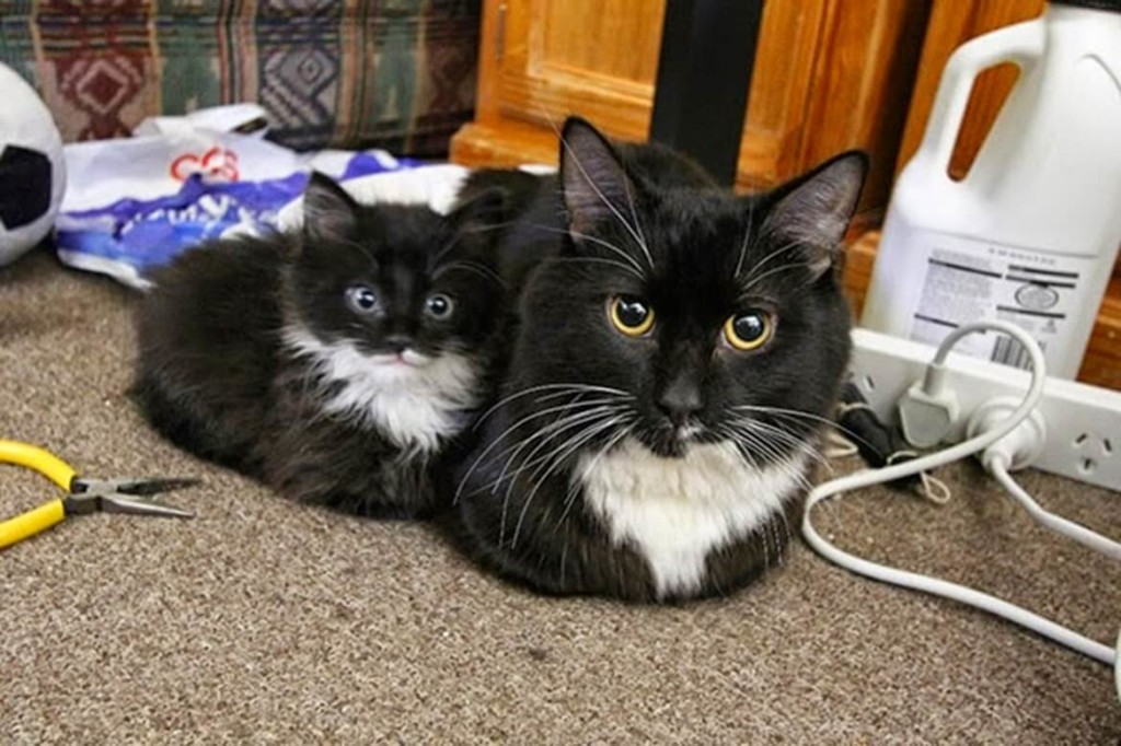 23 Photos Of Cats And Dogs With Their Insanely Cute Mini-Me Counterparts (1)