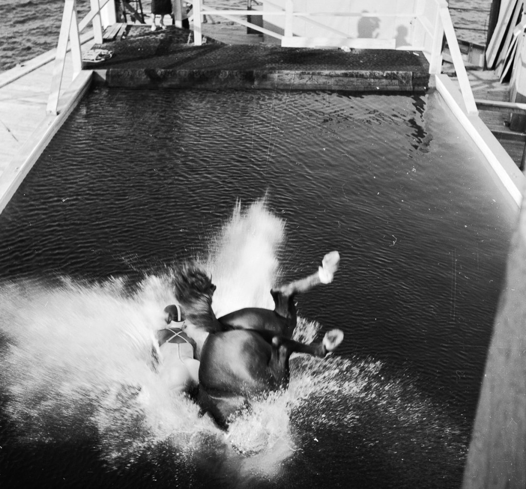 circa 1955:  A diving horse and her rider disappearing in to a swimming pool with a splash.  (Photo by Three Lions/Getty Images)