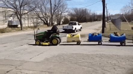rescued-dog-train-tractor-stray-eugene-bostick-gif-1