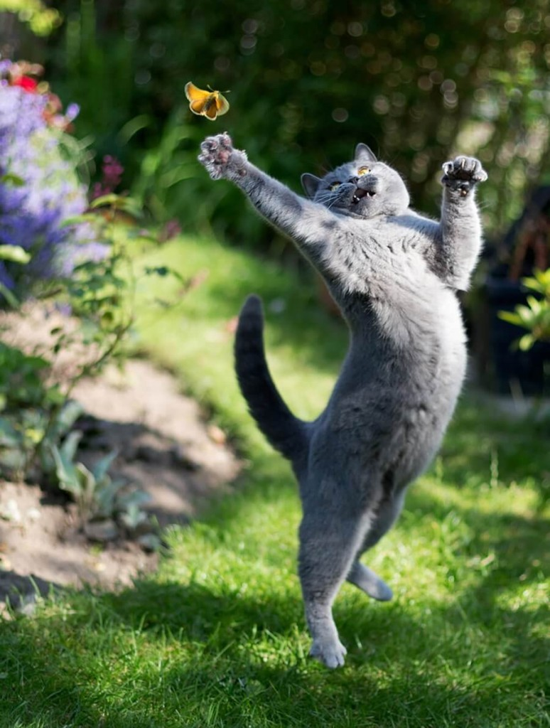 jumping-cats-12 (1)