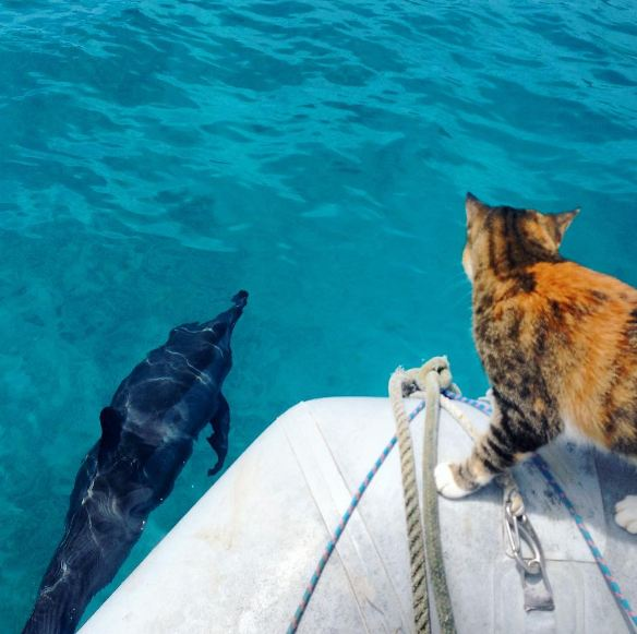 the cat and a dolphin