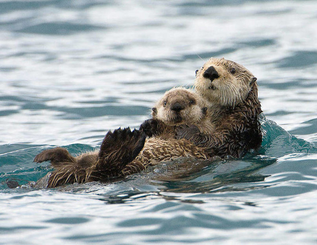 mother-and-baby-otter-s1200x928-451206-1020[1]