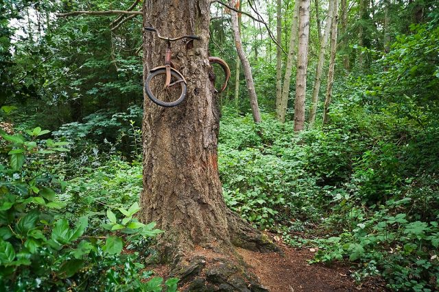 A bicycle inside a tree