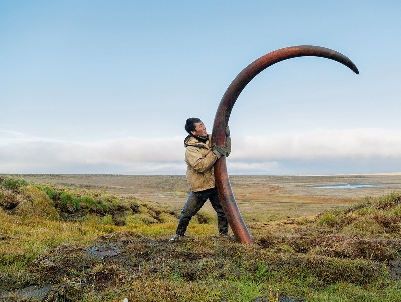mammoth-tusk-finder-siberia