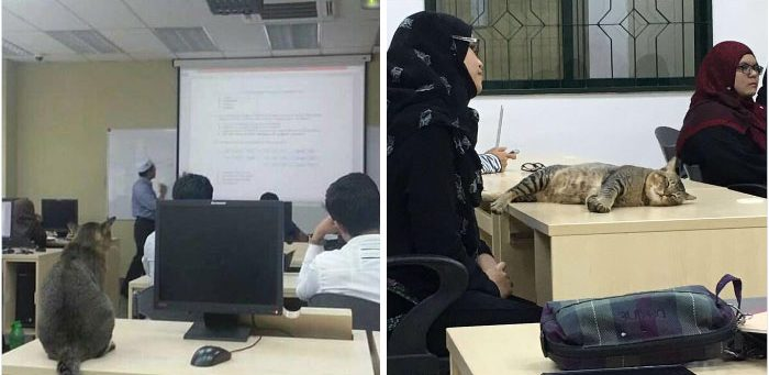 cat-sleeps-university-lecture-malaysia-21
