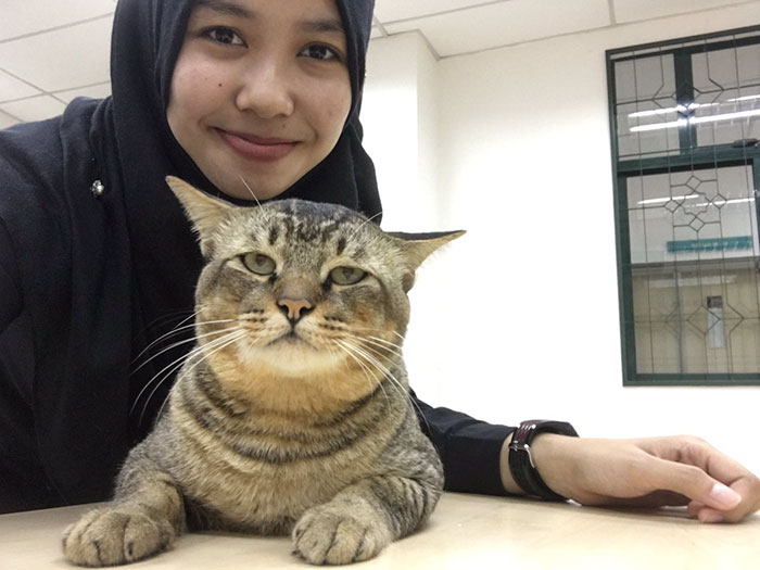 cat-sleeps-university-lecture-malaysia-51