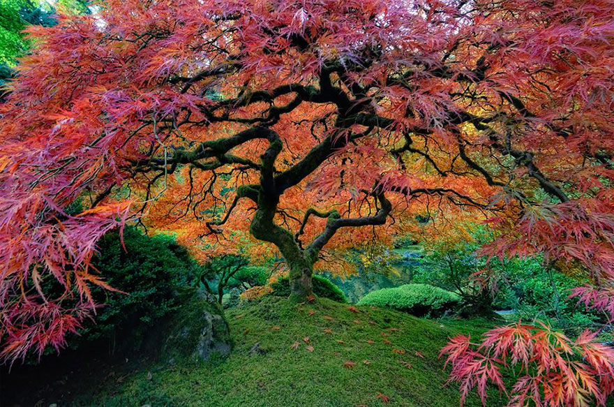 05-Japanese-Maple-In-Portland