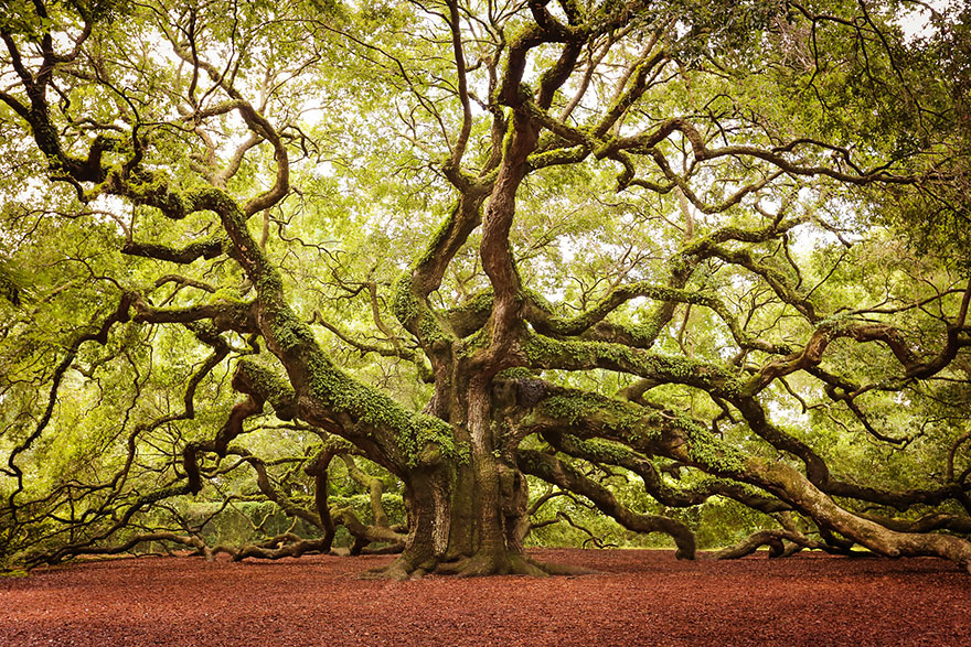 09-Angel-Oak