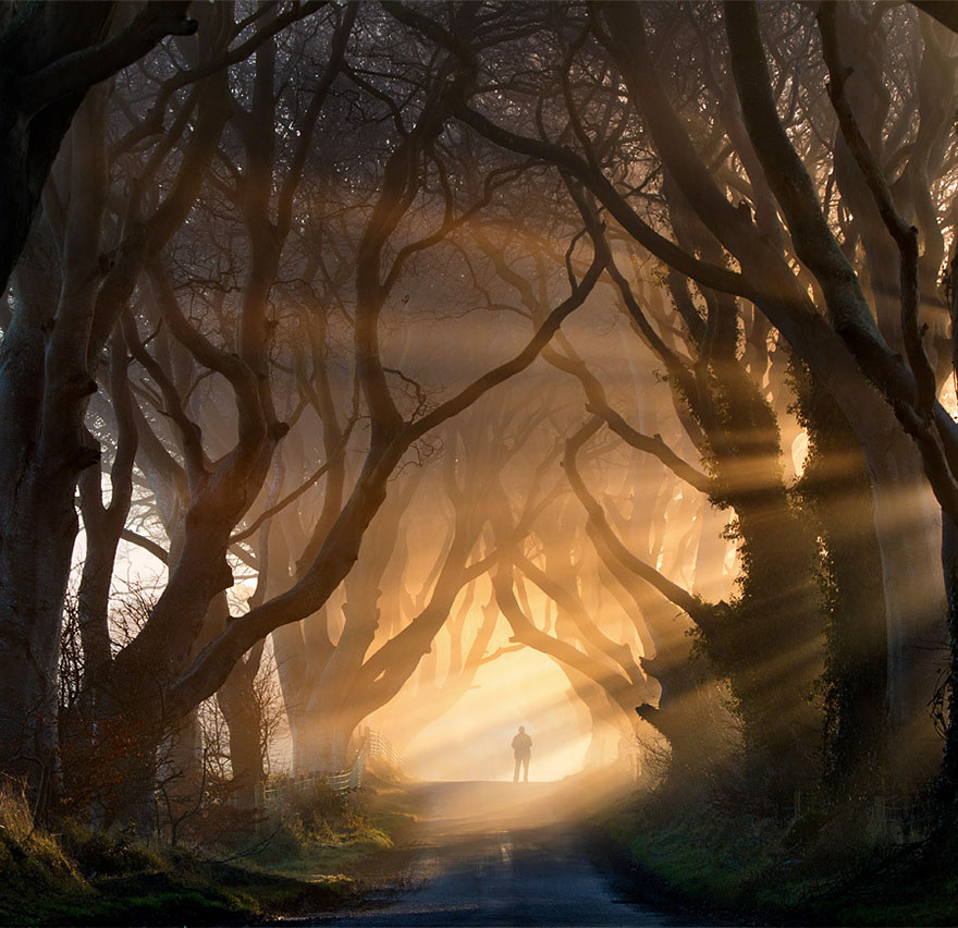 19-The-Dark-Hedges