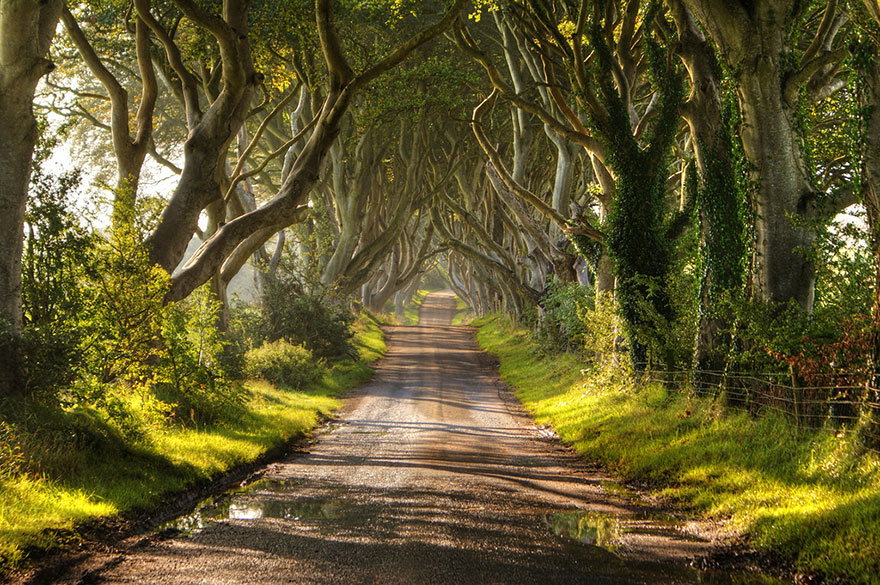 20-The-Dark-Hedges
