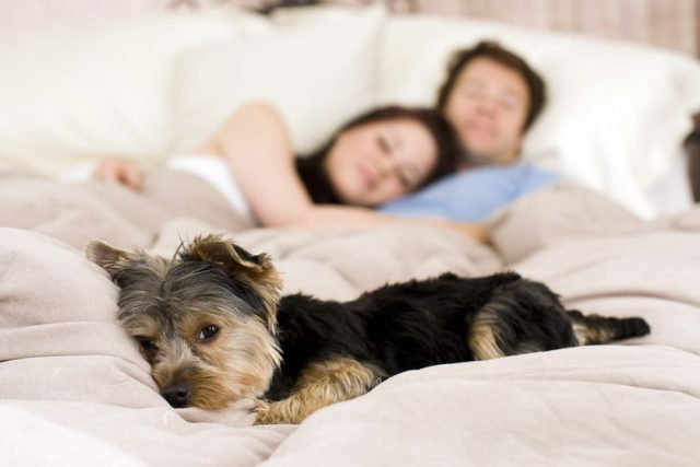 couple-bed-dog.jpg.838x0_q80